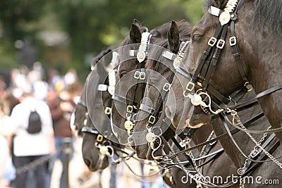 Horses Changing Guard