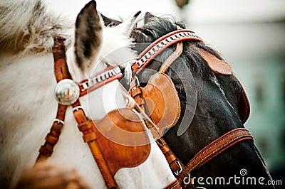 Horses closeup