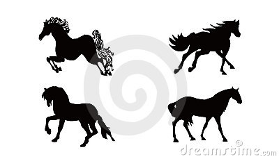 Horses collections