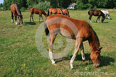 Horses and colt on the farm