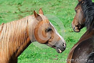 Horses in Cornwall