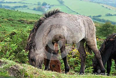 Horses in Cornwall