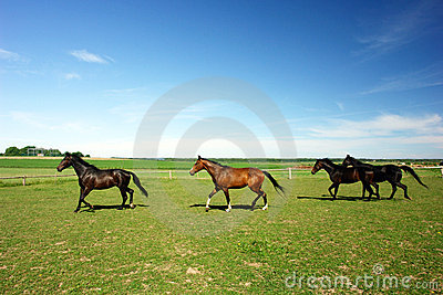 Horses in countryside