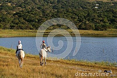 Horses and Dam