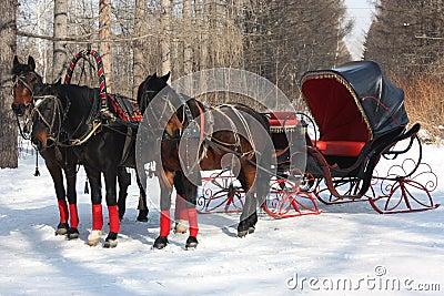 Horses driving cab