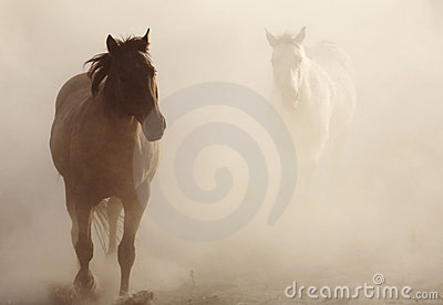 Horses in the Dust