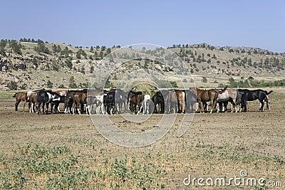 Horses eating at Black Hills