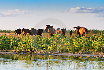 Horses on the edge of a channel of water