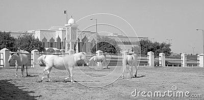 Horses and emiri palace