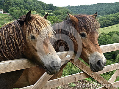 Horses in England