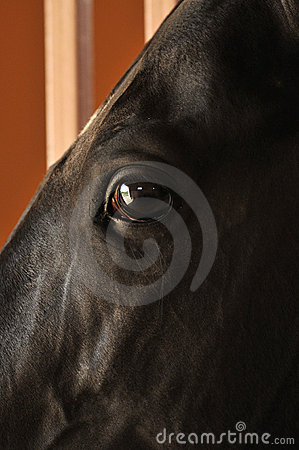 Horses eyes close up