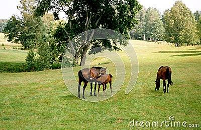 Horses family.