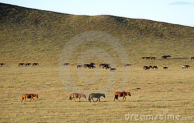 Horses on golden grassland in Autumn