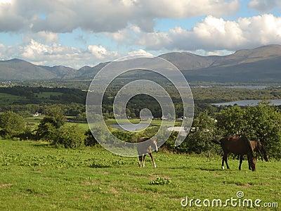 Horses, grass and lakes in Killarney, Ireland