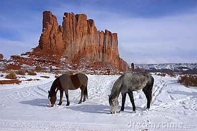 Horses Grazing and Foraging in the Winter mountain