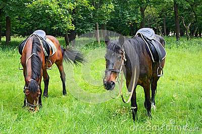 Horses grazing on the lawn