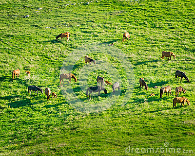 Horses grazing in a meadow