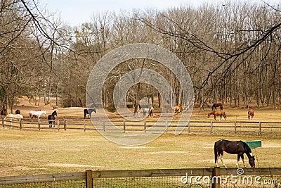 Horses Grazing in Pastures Between Fences