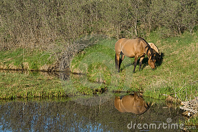 Horses grazing by river