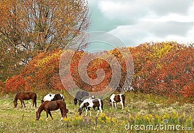 Horses grazing scene