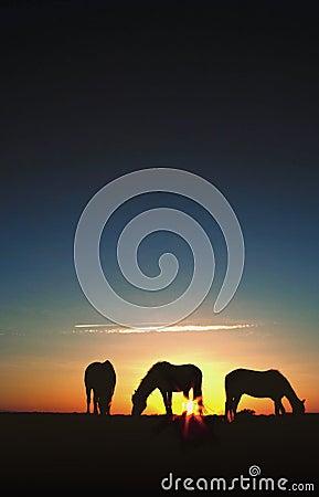Horses Grazing at Sunrise Silhouette