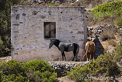 Horses in Greek province