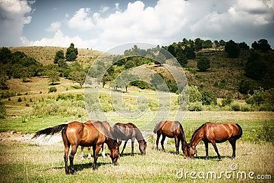 Horses on green rural land