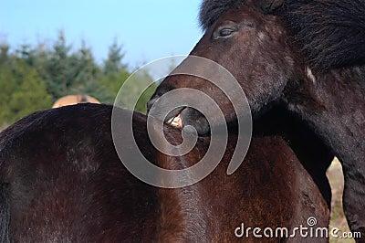Horses Grooming