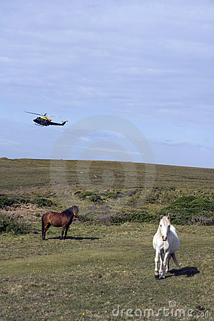 Horses and helicopter