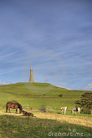 Horses on Hoad Hill