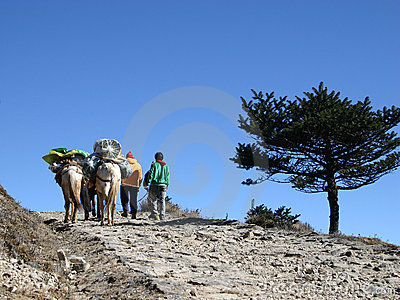 Horses and horsemen, Himalayans, Northeast India Editorial Stock Photo