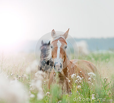 Free Horses In Field Royalty Free Stock Images - 41373359