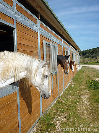 Free Horses In Stall Stock Image - 13533621