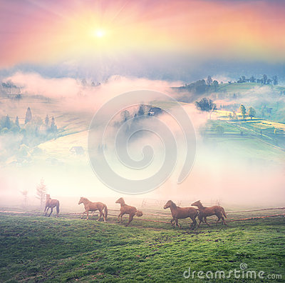 Free Horses In The Fog At Dawn Stock Photography - 93190622