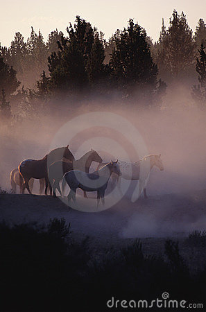 Free Horses In The Forest Royalty Free Stock Images - 11027099