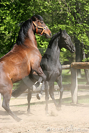 Free Horses In The Park Royalty Free Stock Image - 2388896