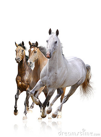 Free Horses Isolated Royalty Free Stock Photography - 21000827