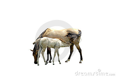 Horses isolated