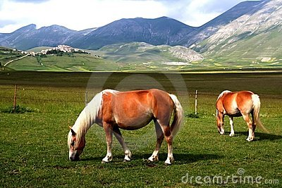 Horses with landscape