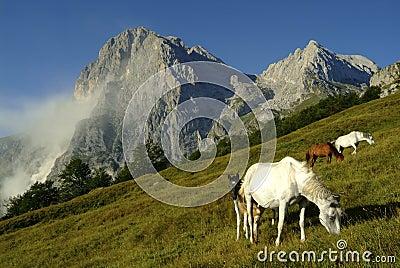 Horses and landslide