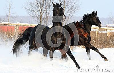 Horses at liberty