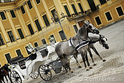 Horses and luxurious carriage