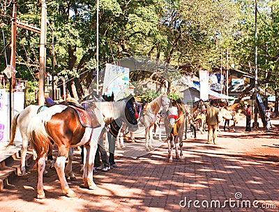 Horses in Matheran , India Editorial Stock Photo