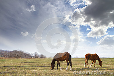 Horses In A Meadow Royalty Free Stock Photos - Image: 26336288