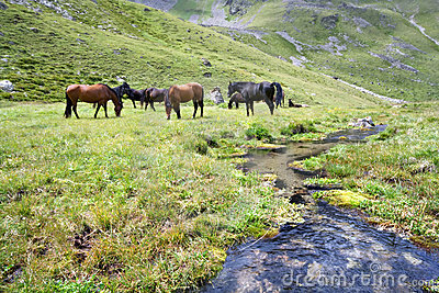 Horses At The Meadow Near Stream,Caucasus Mountain Stock Photography - Image: 12888472