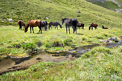 Horses at the meadow near stream,Caucasus mountain