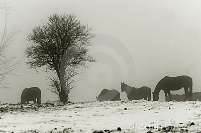 Horses in misty landscape