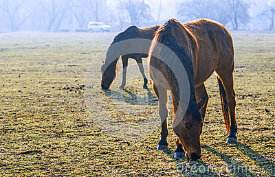 Horses in the Monza Park