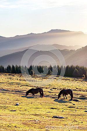 Horses in the mountain with haze at morning