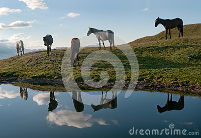 Horses near the lake